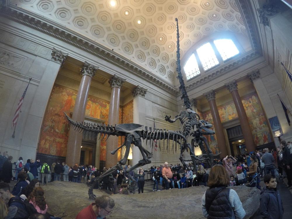 Dia 5: Museo de Historia Natural. Central Park (parte sur).